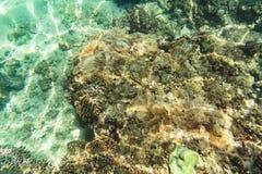 Orange Clownfish Lizenzfreies Stockfoto