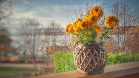 Orange Clustered Petaled Flowers in Brown Wicker Pot on Brown Wooden Plank stock photo