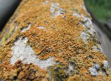 Orange colony of fungus close-up stock photography