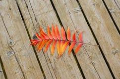 Orange color autumn leaf lie wooden lake bridge Stock Images
