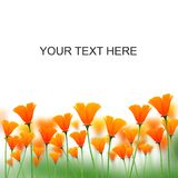 Orange color flowers on white space for messages Royalty Free Stock Images