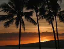 Orange Color Hawaiian Sunset in Honolulu Hawaii. A vivid orange colored sunset behind palm trees on the island of Oahu in Honolulu, Hawaii royalty free stock image
