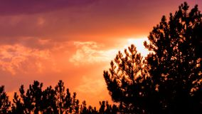 Orange color sunset sky with silhouette of pine trees. Sun and clouds scene photo royalty free stock photos