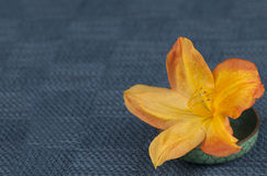 An Orange Colored Azalea called Arneson Gem in an Oriental Dish on Textured Blue Placemat with space or room for text, copy, or yo Stock Photography