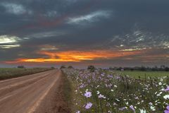 Orange colored clouds at sunset and cosmos flowers. South Africa royalty free stock photo