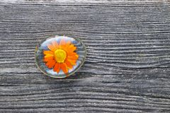 Orange colored flower embedded in resin. Lying on an old gray wood plank, background with copy space royalty free stock image