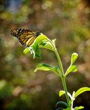 Monarch butterfly green leaf flower royalty free stock photography