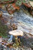 Orange colored mushroom formed under the tree,. Wet ground, in the forest royalty free stock photography