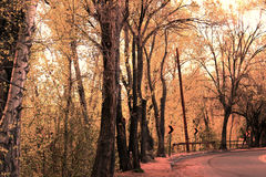 Orange colored trees. On E. Alameda in Santa Fe, NM Stock Image