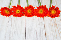 Orange colorful gerbera flowers. On the wooden table Stock Photos