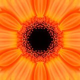 Orange Concentric Flower Center Mandala Kaleidoscopic design Stock Image