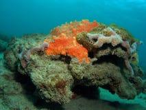 Orange Coral mound Stock Photos