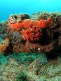 Orange Coral Mound Royalty Free Stock Image