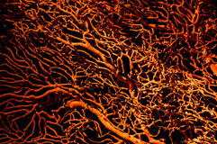 Orange Corals. A closeup of the orange corals Stock Photos
