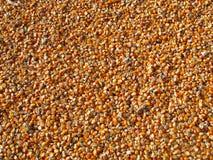 Orange Corn Kernels Stock Photography