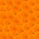Orange cosmos background Royalty Free Stock Image