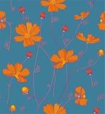 Orange cosmos flowers Royalty Free Stock Images