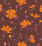 Orange cosmos flowers Stock Image