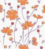 Orange cosmos flowers Royalty Free Stock Image
