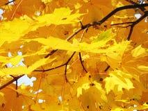 The orange counterfeit leaf Royalty Free Stock Image
