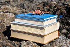 Orange Crab On Blue Books Royalty Free Stock Photos