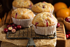 Orange cranberry muffins stock images
