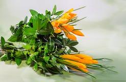 Orange crocus heuffelianus flowers, floral arrangement, bouquet, green degradee background, close up. Royalty Free Stock Photo