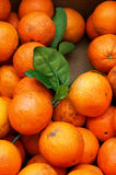 Orange crop. Fresh oranges in a box Stock Photography