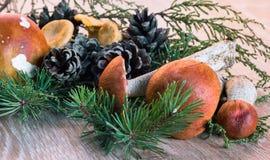 Orange-cup boletus mushroom on a wooden background Stock Photo