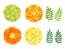 Orange décorative, soucis jaunes verts et feuilles, symbole du jour mexicain de vacances des morts d'isolement sur le blanc illustration libre de droits