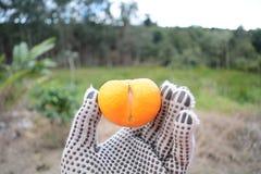 Orange déformée Image libre de droits