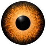 Orange 3d eye texture with black fringe. Orange 3d eye with black fringe and lines texture Stock Photos