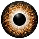 Orange 3d eye texture with black fringe. Orange 3d eye with black fringe and lines texture Stock Photography