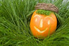 orange d'herbe de poupée photo stock