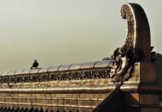 Orange Dach und Vogel Lizenzfreies Stockbild
