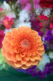 Orange Dahlia. Fresh bouquet with beautiful orange dahlia royalty free stock photo