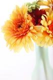 Orange dahlias in a vase Stock Photos