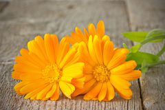 Orange daisies on plank Royalty Free Stock Images