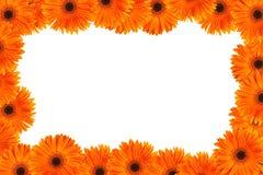 Orange daisy frame Royalty Free Stock Photos
