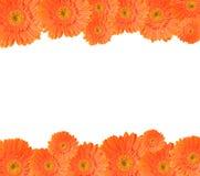 Orange daisy frame Royalty Free Stock Photo