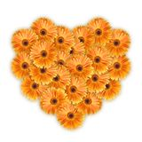 Orange daisy petails Stock Image