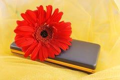 Orange daisy on a present box Stock Photos
