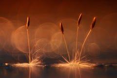 Orange dandelion seeds. Abstract blurred natural background orange dandelion seeds Royalty Free Stock Image