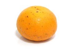 Orange dans l'instruction-macro avec le fond blanc Images libres de droits