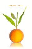 Orange dans les bulles Photos libres de droits