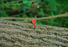 Orange dart stick in tree trunk, closeup royalty free stock photography