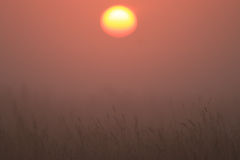Orange dawn with mist Stock Images