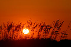 Orange Days end. Sunset with orange sky with seaoats. Fort Desoto Florida royalty free stock photo