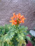 Orange de fleur photos libres de droits