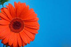 orange de fleur Photos stock